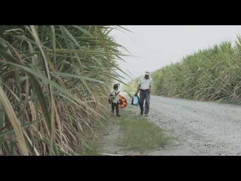 Trailer oficial - LA TIERRA Y LA SOMBRA de César Acevedo - ESTRENO EL 23 DE JULIO EN CINES