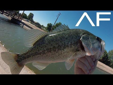 Canal Fishing 4