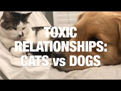 Toxic Relationships: Cats Vs Dogs
