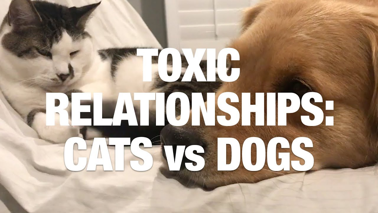 Toxic Relationships Cats And Dogs Video