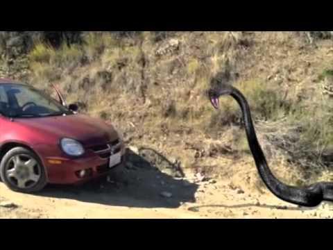 Giant snake sightings Prehistoric Titanoboa in the forest ...
