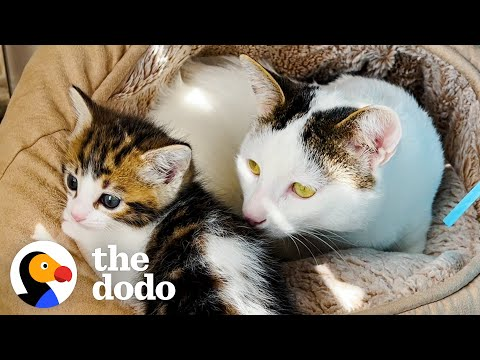 'Aggressive' Cat Meets A Tiny Kitten And The Cutest Thing Happens | The Dodo Cat Crazy