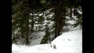 Hi jakt på rev, Fox hunting(Dette er et klipp fra hi jakt på rev. Foxhunting with dog., 2008-11-08T22:45:11.000Z)