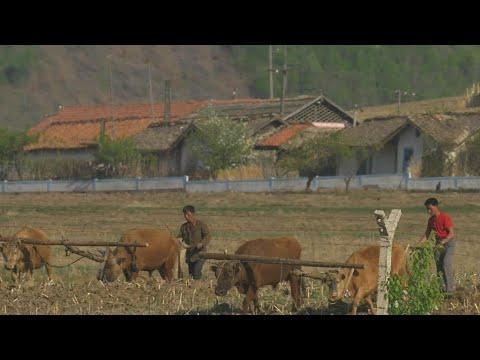 有刺鉄線と密輸されるカニ 中国国境から見た北朝鮮