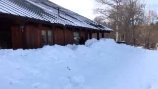 Border Collie Winter Sports
