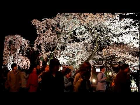 Yozakura: Cherry Blossoms at Night in Shirakawa, Kyoto 【HD】