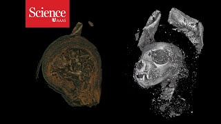 Snippet: 3D imaging reveals the ancient lives of Egyptian animal mummies