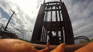 Wolfies farms - Sweet potatoes picking