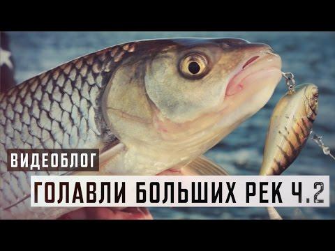 андрей старков река ахтуба ловля язя