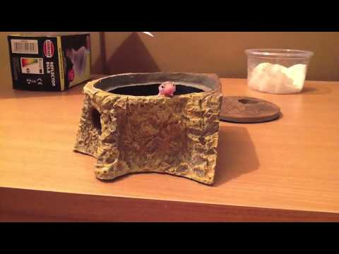 hatchling gecko in her little moss box hide youtube. Black Bedroom Furniture Sets. Home Design Ideas