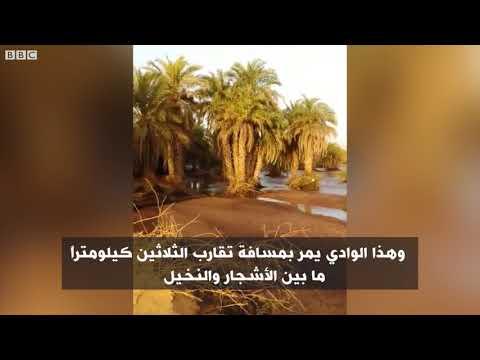 أنا الشاهد: نتعرف على  الزراعة المطرية في موريتانيا  - نشر قبل 2 ساعة