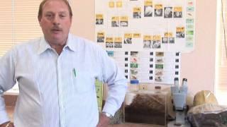 Flea Control : Can Fleas Live in Human Hair?