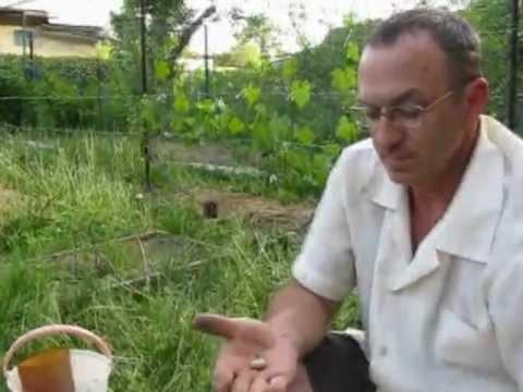 Как победить личинку майского жука (1).