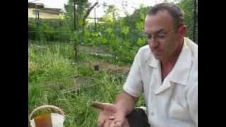 Как победить личинку майского жука (1).(Как победить личинку майского жука на своей даче или приусадебном участке? Подробности на моём блоге - http://da..., 2012-06-06T07:51:17.000Z)