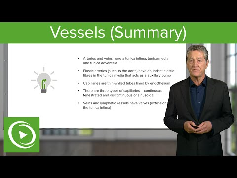 Vessels (Summary)  – Histology | Medical Education Videos