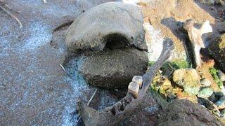 Жесть! Горы человеческих костей на дне Рыбинского водохранилища.