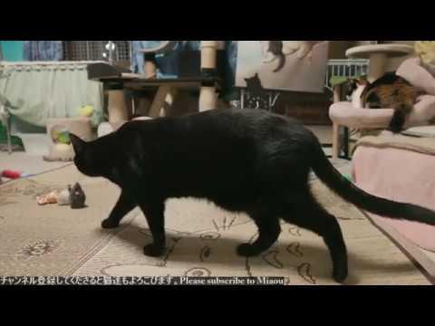2018.7.26 猫日記   Cats & Kittens room 【Miaou みゃう】