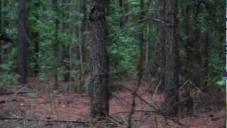 """""""Hog Patrol"""" Wild Hog Hunting Georgia"""