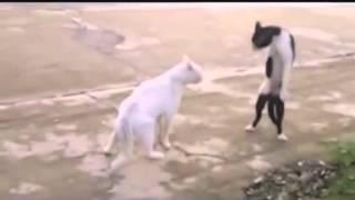 Michael Jackson reincarnated as a cat
