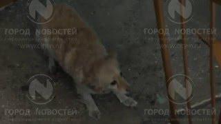 Новокузнецкий террорист возненавидел дом и его жильцов