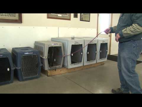 Obedience Training For Bird Dogs