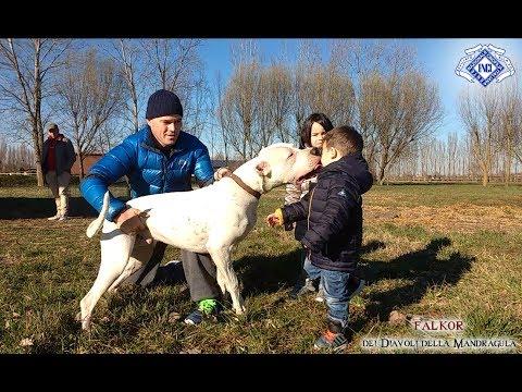 Mandragula Dogo Argentino - Luglio 2017