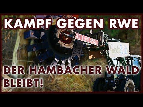 Hambacher Wald: Er bleibt, vorerst!