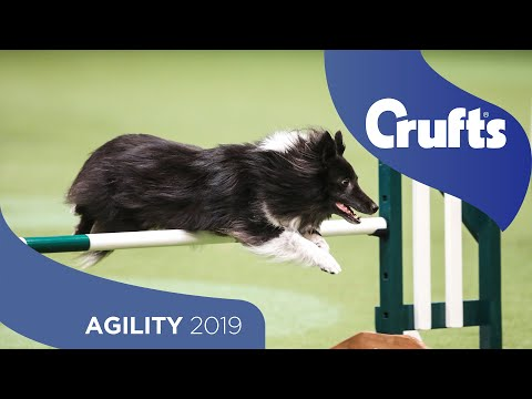 Agility – Crufts Singles Heat – Small (Jumping) | Crufts 2019