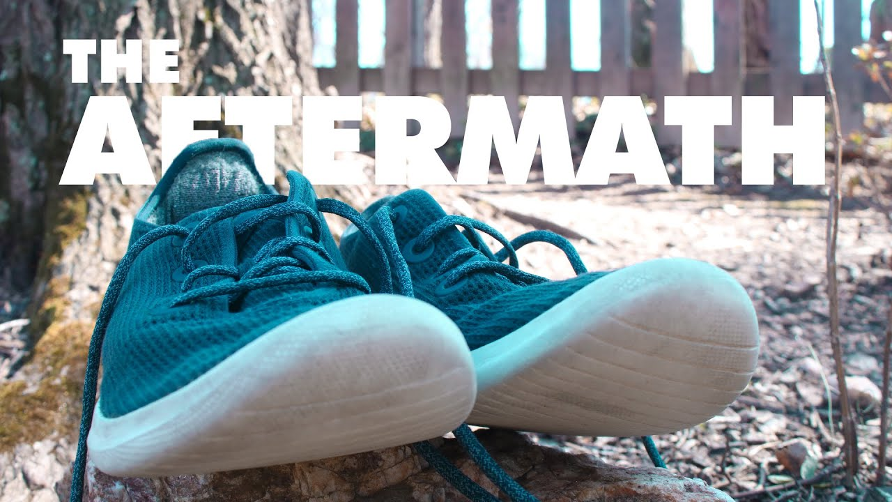 Are They Durable Allbirds Tree Runners 5 Months Later Youtube