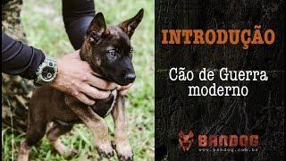 BANDOG programa 1 - O cão de guerra moderno