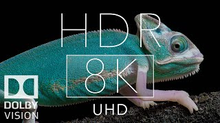 Real 12k HDR Dolby Vision