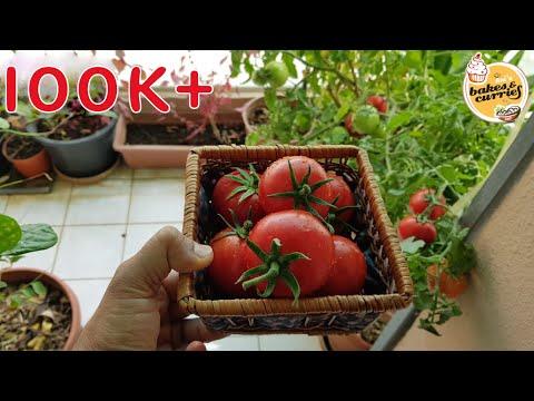 My Small Balcony Garden In Dubai | English Subtitle | Balcony garden ideas |Vegetables you must grow