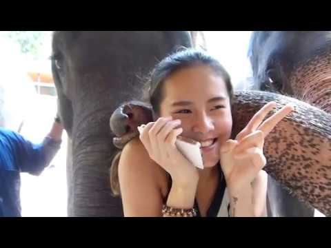 WORLDS FRIENDLIEST ELEPHANTS, MAESA ELEPHANT CAMP, CHIANG MAI, THAILAND, TRAVEL.
