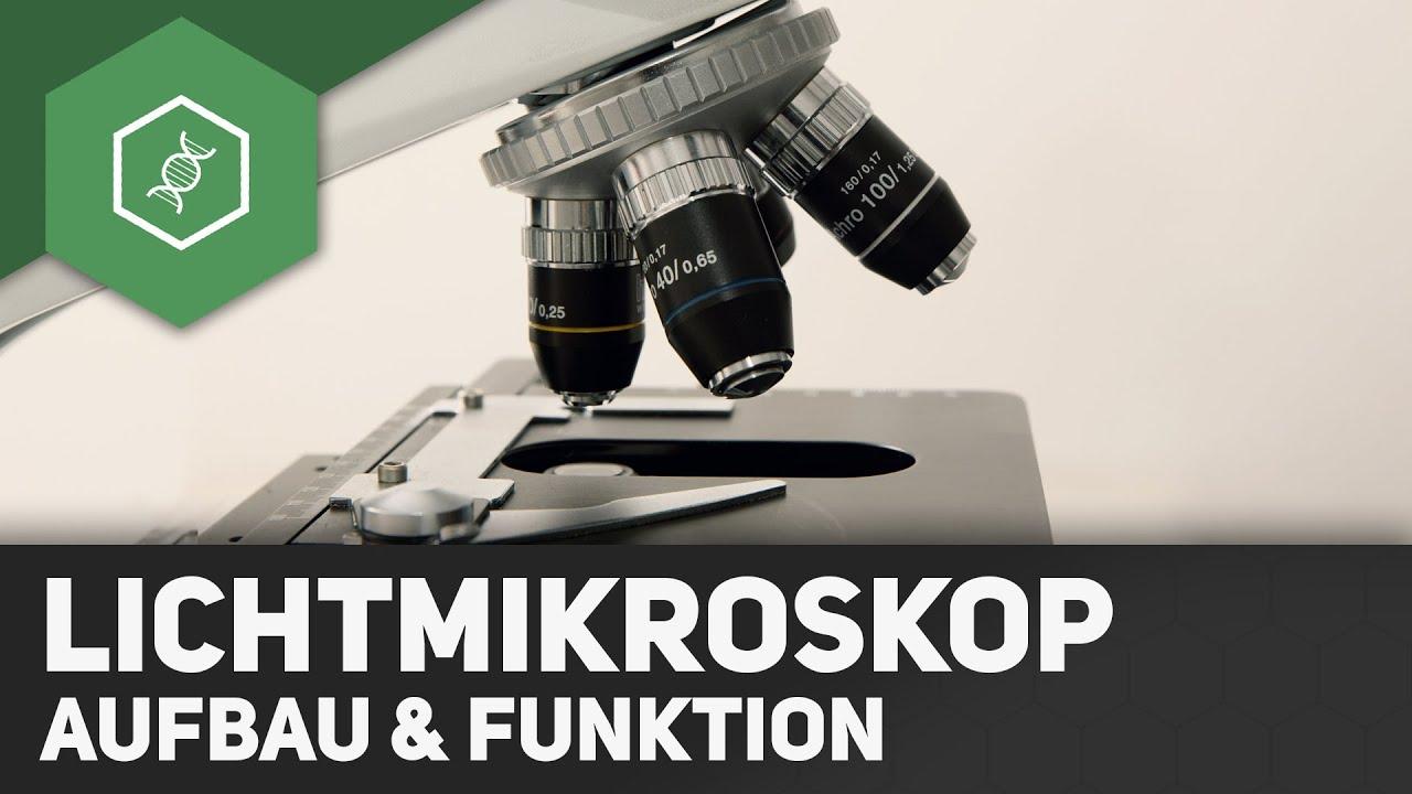Das lichtmikroskop u aufbau und funktion ○ gehe auf simpleclub