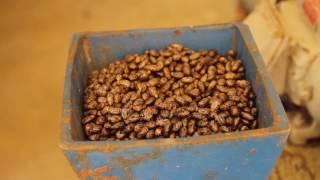 Un jour à Marie-Galante Ep. 1 - Fabrication de l'huile de carapate (EMG)