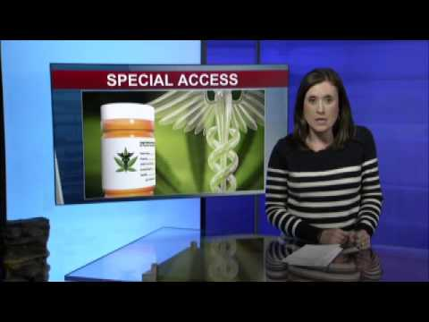 NY to give the critically ill faster access to medical pot