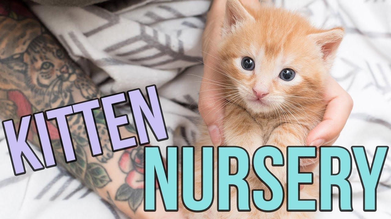 Kitten Nursery In Austin Tx