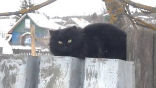 Только чёрному коту и не везёт! #ГужевTV