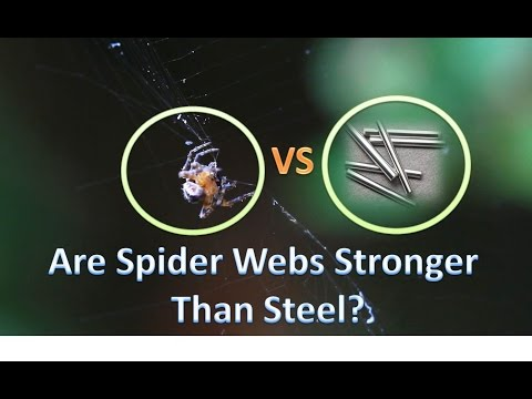 Are Spider Webs Actually Stronger Than Steel? | Experiment