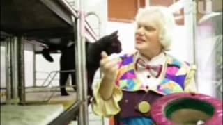 Уроки доброты с Юрием Куклачевым: заводим котенка