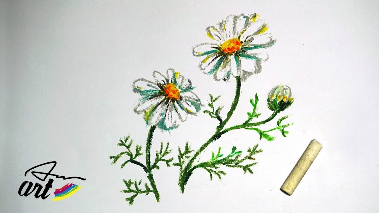 How To Draw Chamomile Flowers With Oil Pastels Youtube