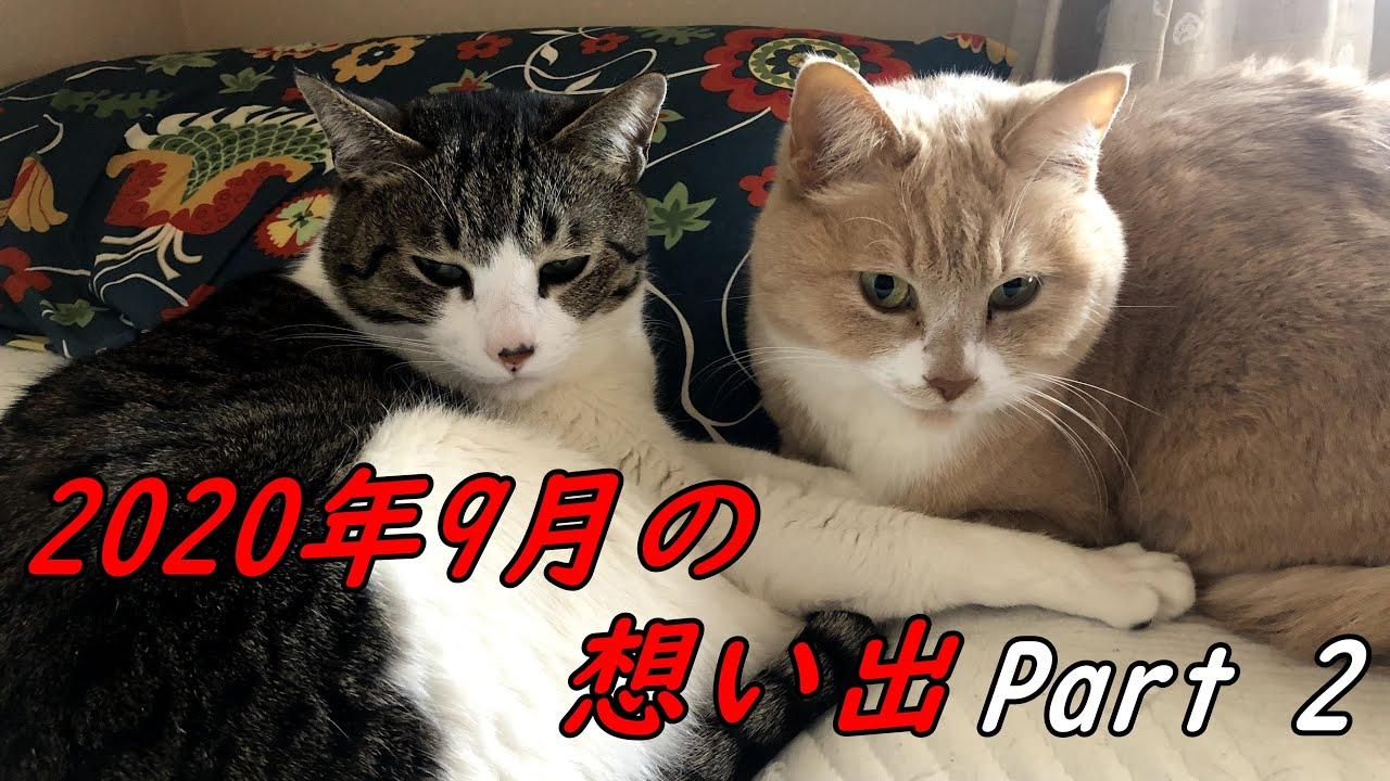 【猫日記こむぎ&だいず】2020年9月の想い出 Part2