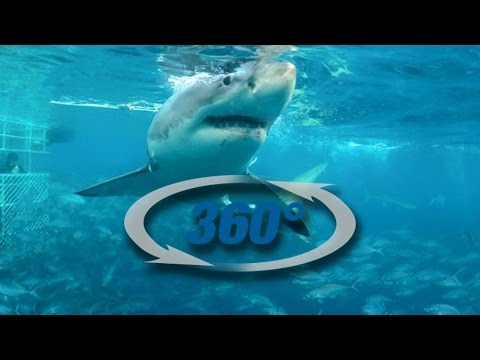 360° Shark Cage Dive with Calypso Star