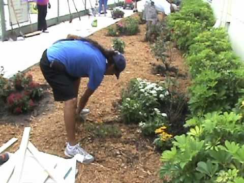 south florida boy scout creates a butterfly garden for eagle project at an elementary school youtube - Florida Butterfly Garden