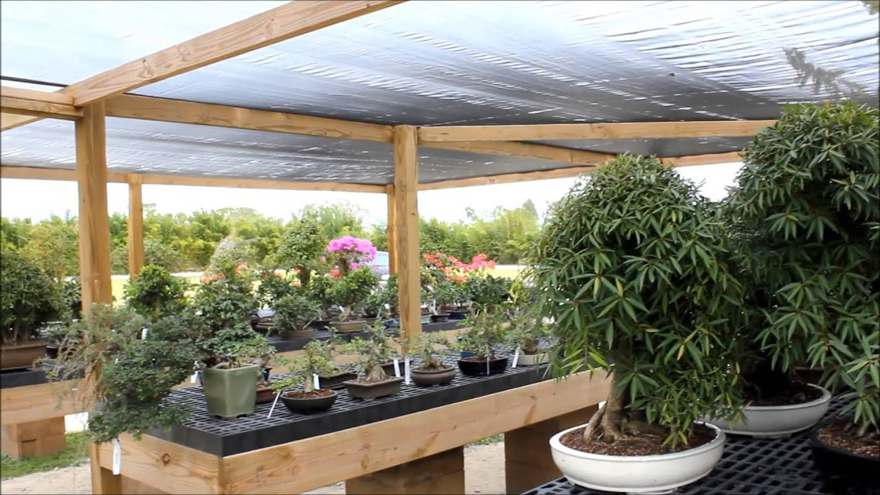 Wigerts Bonsai Nursery North Fort Myers Florida U S A By Brpinele Productions