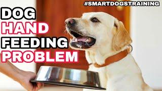 Dog Hand Feeding Problem | Dog hatho se khana khata hai khali | Dog Khana nahi khata kya karu??