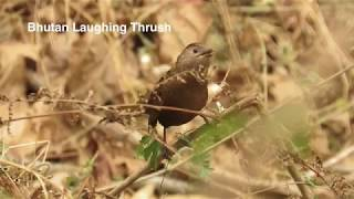 Zemithang Biodiversity 2016-17