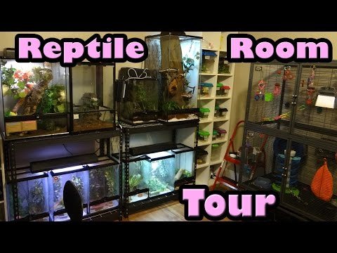 REPTILE ROOM TOUR!