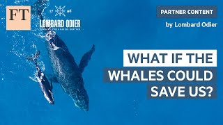 What if the Whales Could Save Us? | Rethink Sustainability