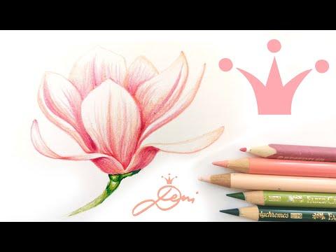 Magnolie zeichnen 🌸